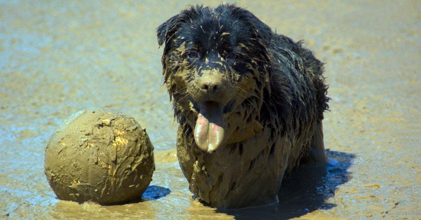 Certain chiens ont besoin d'être lavés plus souvent que d'autres...