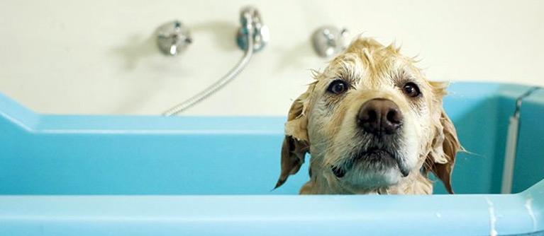 Pour laver votre chien en baignoire sans encombres, faites lui comprendre qu'il n'a rien à craindre.